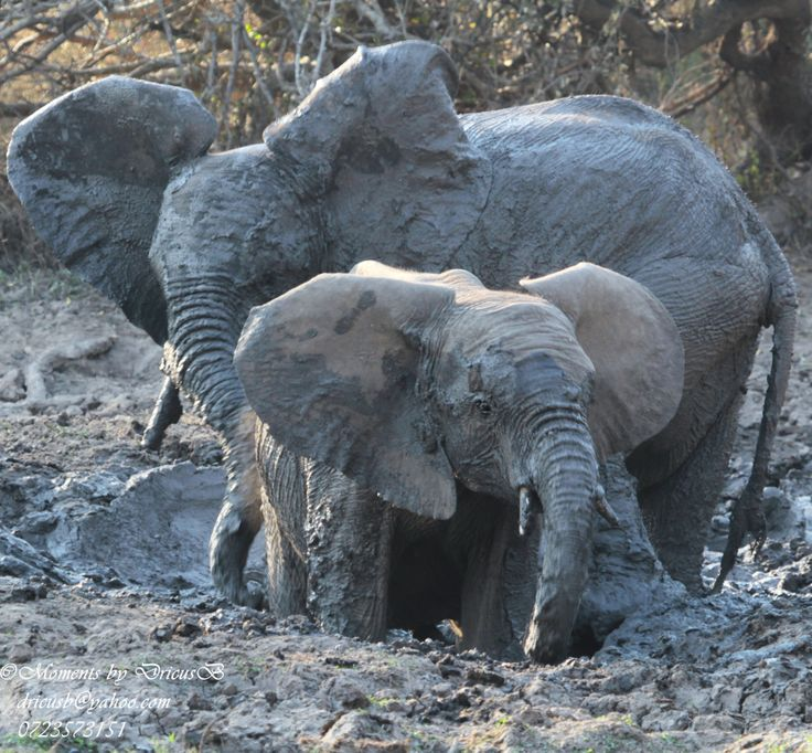 Mudfun - Me and mom, elephants in Kruger National Park