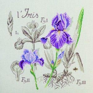 Point de croix : étude à l'iris (Les brodeuses parisiennes).