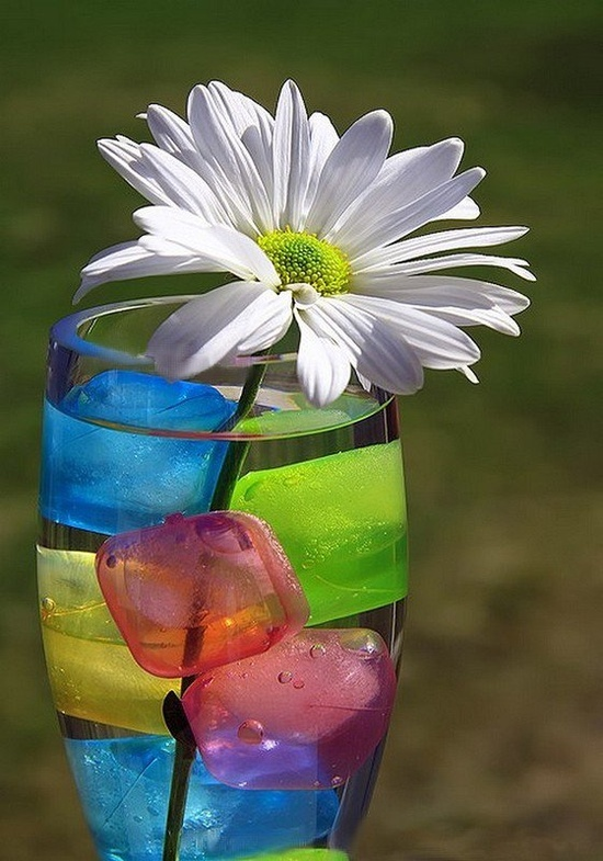 colored ice with a flower | BGVJ