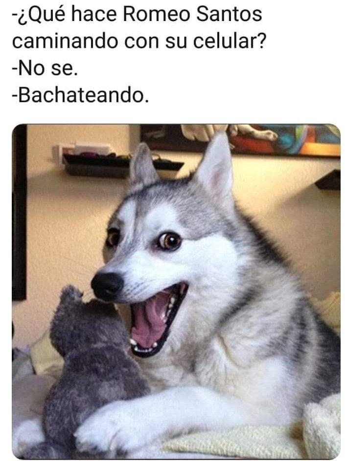 Pin By Cami 29 On Humor Y Algo Mas Dog Puns Dog Jokes Pun Husky