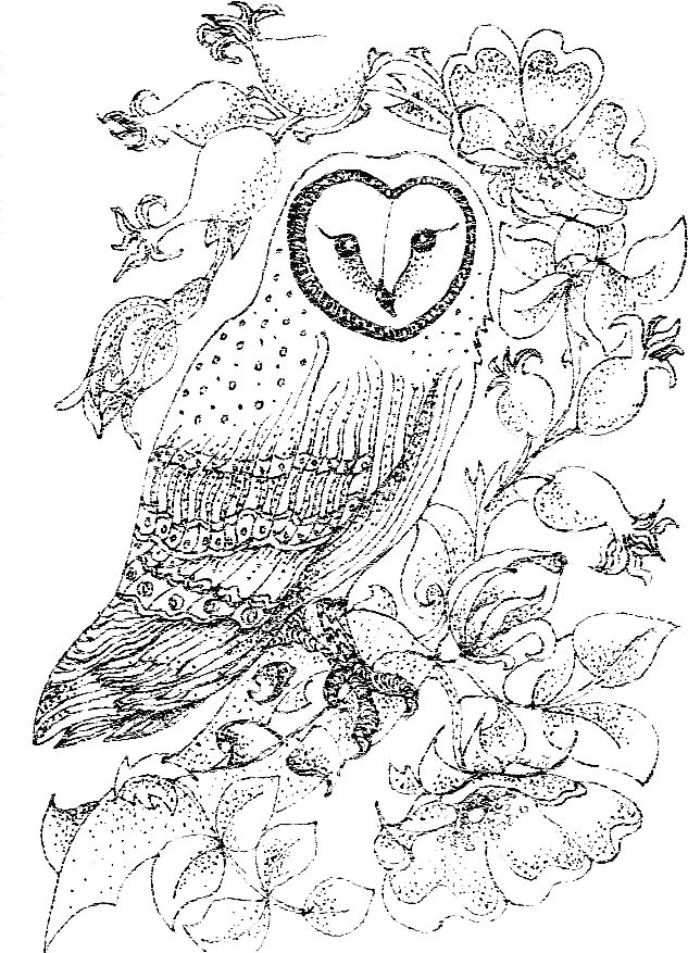 Owl Fly Coloring Coloring Pages