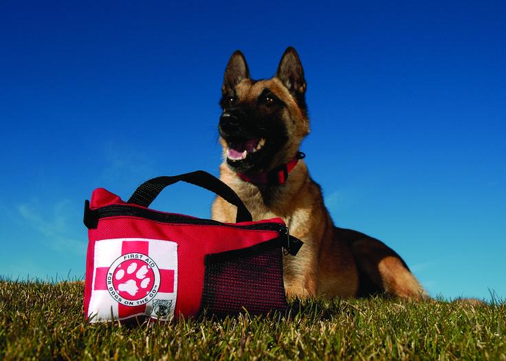 Πρώτες Βοήθειες Για Σκύλους & Φαρμακείο | www.dogshappytraining.gr