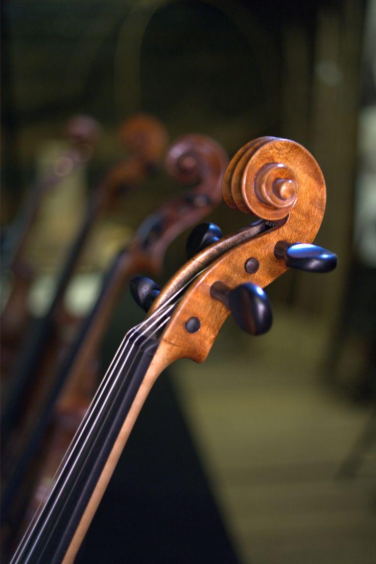♪♫ Music ♪♫ Violins musician instrument details.