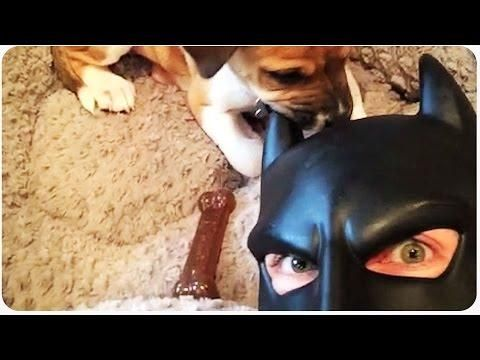 Batman Dad Is Back With More Funny Videos  - #funny #Batman #BatDad #parenting