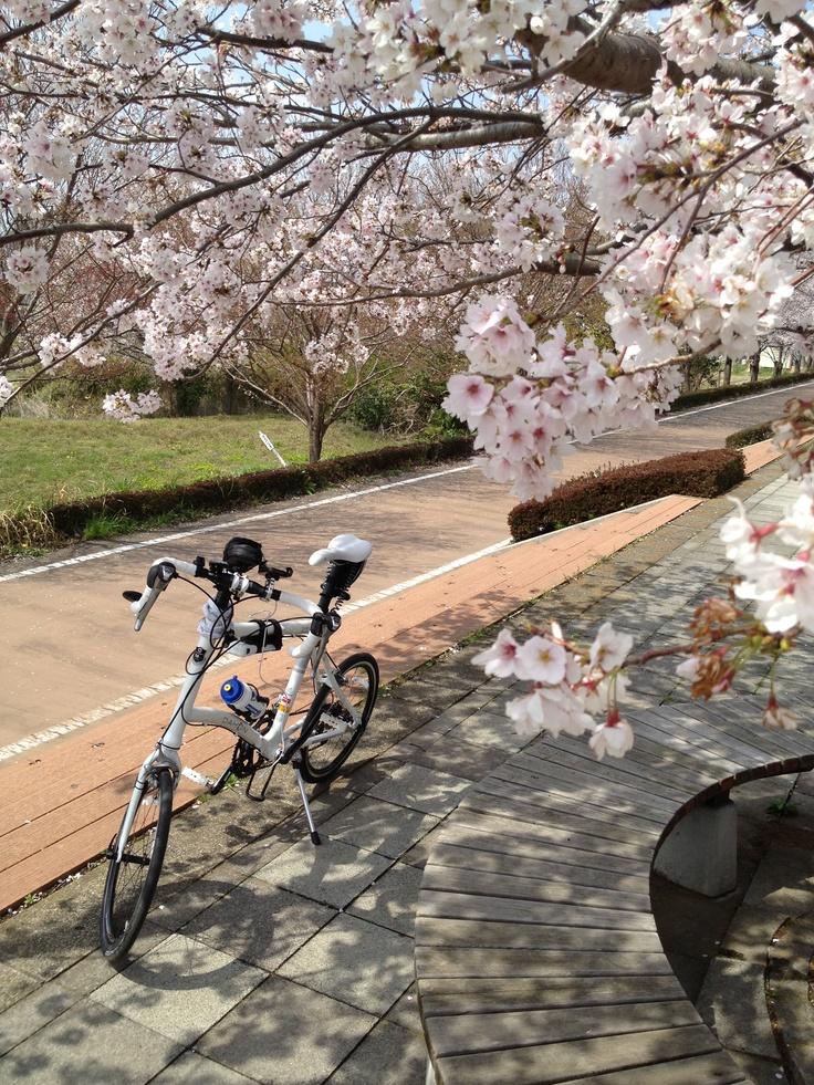 ©fukuchanさま / DASH x20 2013年 / 2013/4/1 茨城県つくば市 iPhone4Sで撮影