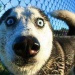 crazy face dog