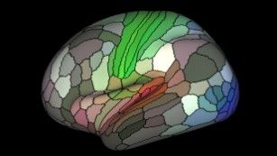 Image shows a map of myelin content (red, yellow are high myelin; indigo and blue are low myelin) in the left hemisphere of cerebral cortex.