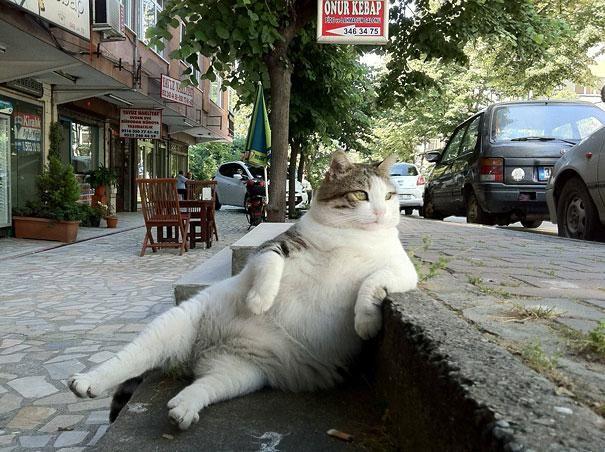 Il semble que certains animaux aient oublié qu'ils étaient des animaux ... Un Chat accoudé à une margelle