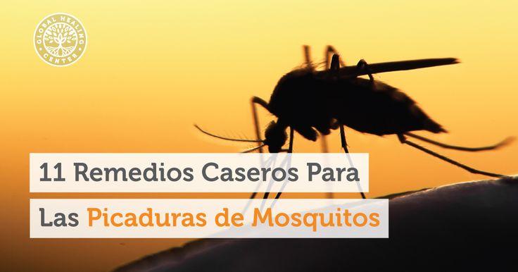 Afortunadamente, mientras que la Madre Naturaleza nos ha dado la presencia de estos latosos animalitos, también nos ha brindado estupendos remedios para tratar las picaduras de mosquitos.