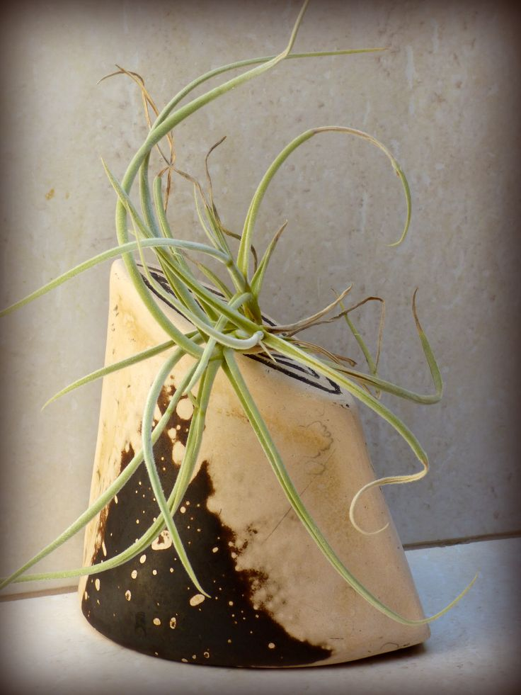 Obvara technique vase with tillandsia