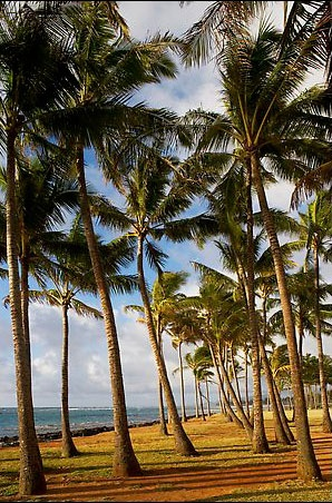 In the land where palm trees sway...