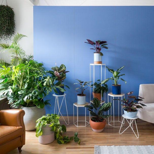 5 plantas para ter dentro de casa plants gardens and - Pedestal para plantas ...