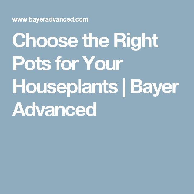 Choose the Right Pots for Your Houseplants | Bayer Advanced