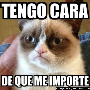Tengo cara de que me importa - Tap the link now to see all of our cool cat collections!