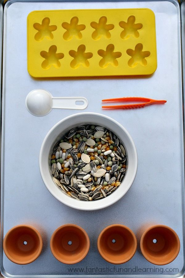 Spring tray activity, use seeds for fine motor and sorting activities for kids!
