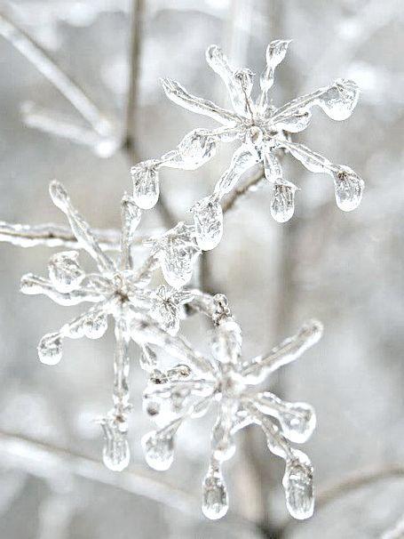 Winter *❄~*.Wishes & Dreams.*~❄*