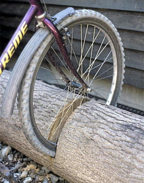Repurpose a fallen tree into the ultimate bike stand! might need a few metal staples to attach bike locks to