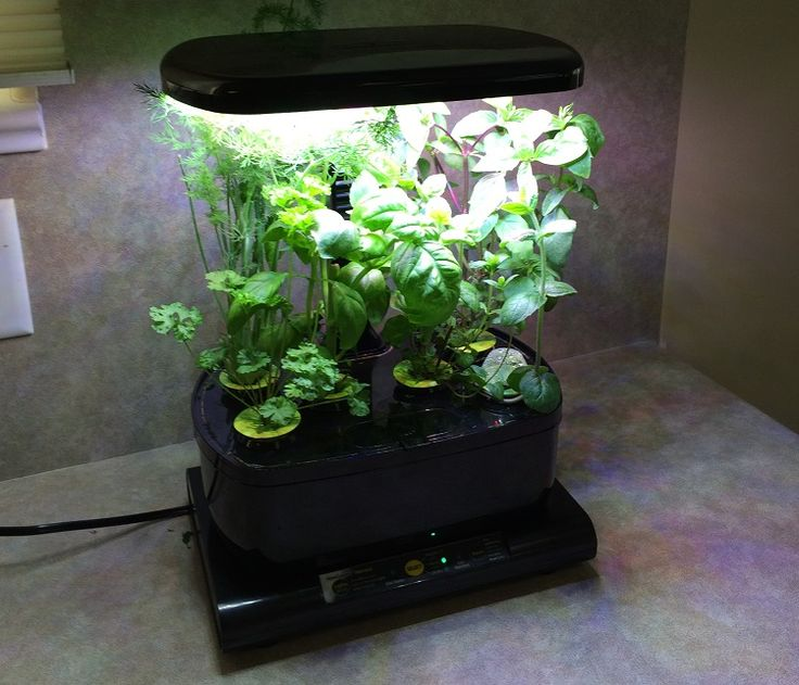 The 25 Best Hydroponics Kits Ideas On Pinterest Indoor