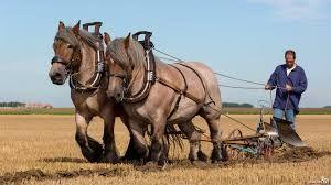 Afbeeldingsresultaat voor trekpaarden