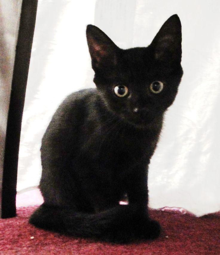 baby black cat | BLACK CATS | Pinterest