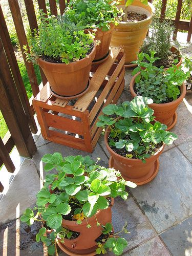 Container Gardening: Vegetables And Herbs