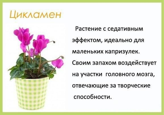 всей выразительностью полезные советы про цветы с картинками тренировках, когда