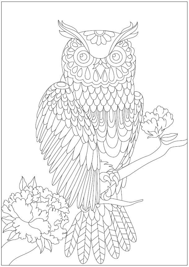 269 best Owl Coloring Pages for Adults images on Pinterest | Owls ...