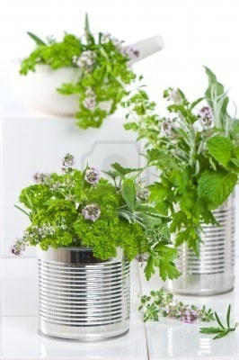 Resultat av Googles bildsökning efter http://us.123rf.com/400wm/400/400/chris_elwell/chris_elwell1007/chris_elwell100700023/7301551-fresh-herbs-in-recycled-tin-cans-with-pestle-and-mortar-in-the-kitchen.jpg