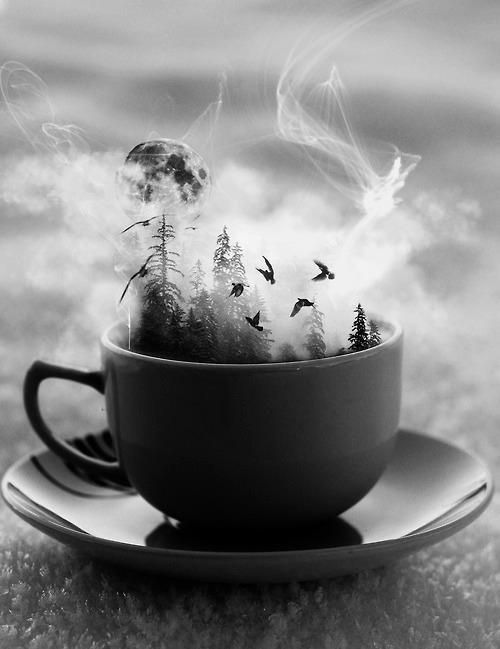 Forest in a teacup.