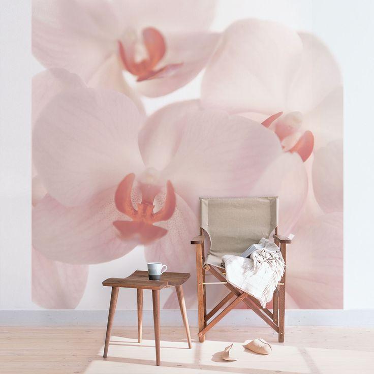 Fototapete Orchidee - Svelte Orchids - Helle Orchideen - Vliestapete Quadrat