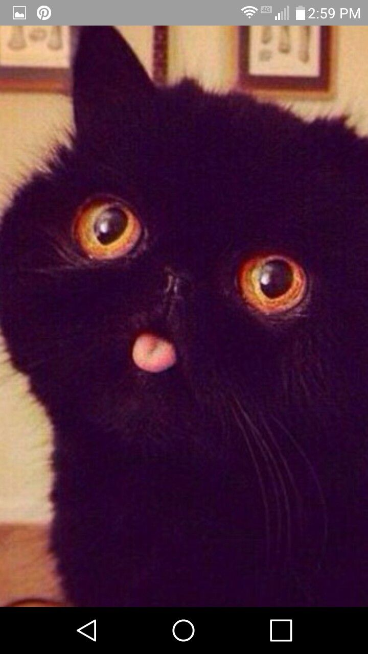 Best The Derpy Cats Images On Pinterest Cats - 35 cats pulling ridiculous faces imaginable
