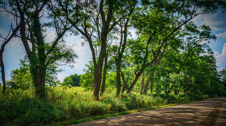 Summer farm road in Caledon Ontario. I found the dappling of the late afternoon sun through the trees on to the road creating a very relaxing and peaceful atmosphere.