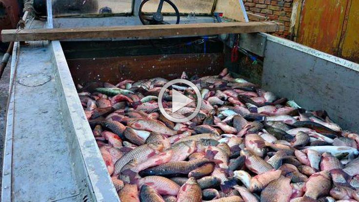 Жесть сколько рыбы Это уже не рыбалка а браконьерство Best fisheng Очень...