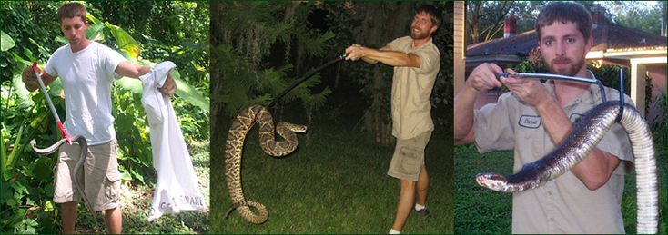 Snake Removal - How to Get Rid of Snakes - Snake Trap, Repellent, Control Services