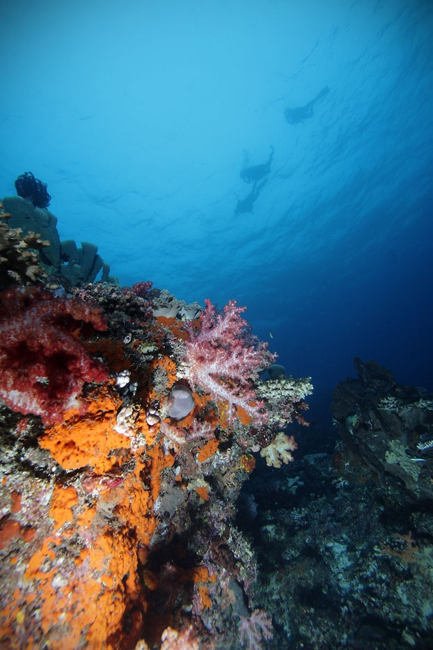The Cendrawasih Bay National Park is a home for diverse, colorful, and bountiful corals. Therefore, besides Raja Ampat, this national park also offers an unforgettable diving experience in West Papua