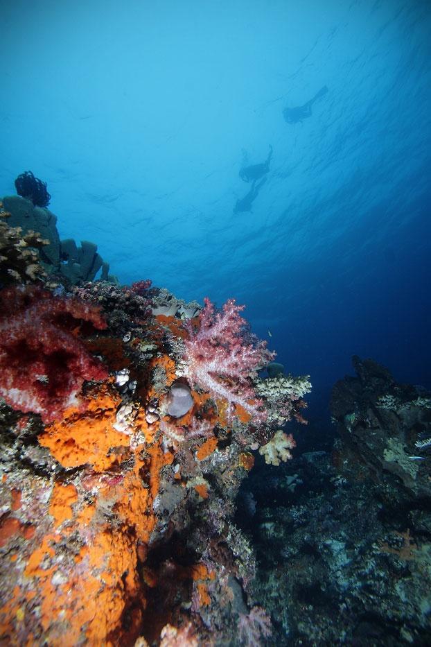 keindahan bawah laut in West Papua