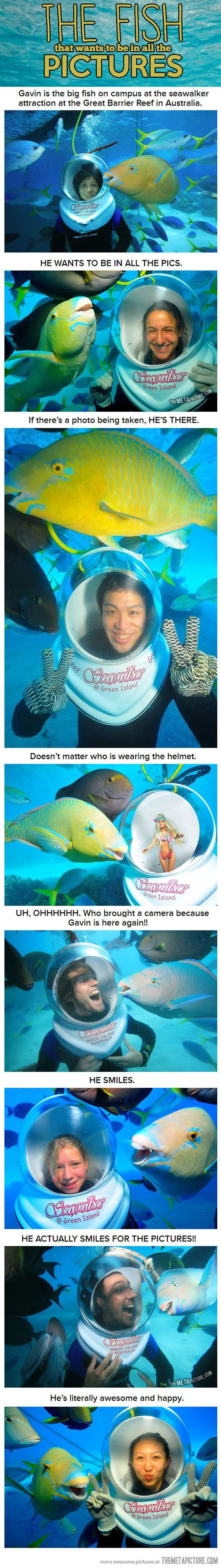 Introducing ridiculously photogenic fish…
