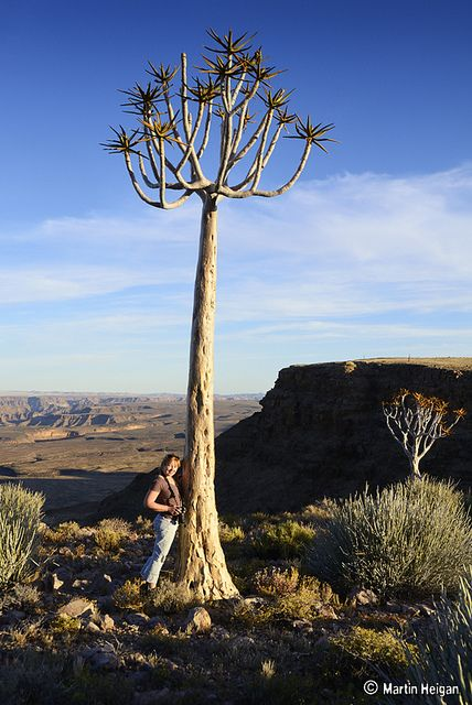 Fish River Canyon Quiver Tree by Martin_Heigan, via Flickr