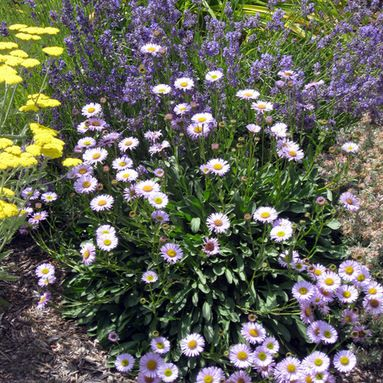 48 Best Plants That Grow Under Oak Trees Zone 9 And Sunset