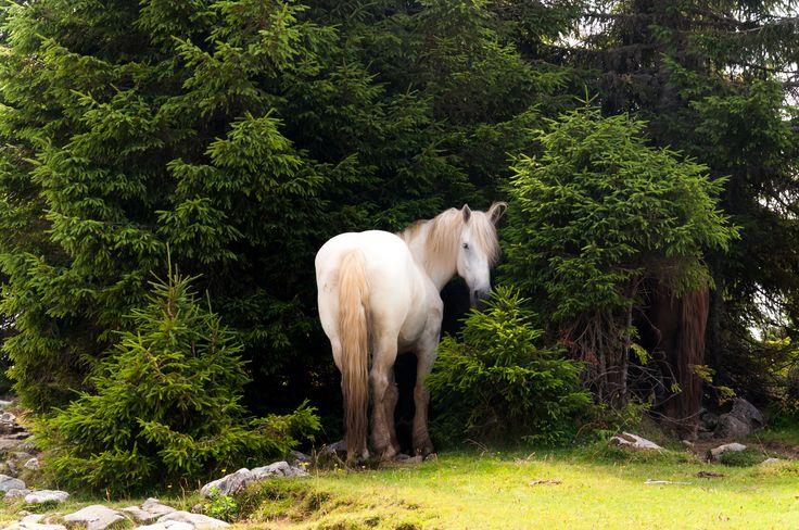 White beauty by Fabi Nuka on 500px