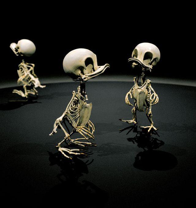 "Animatus, Realistic Skeletons of Cartoon Characters - ""Anas Animatus H, Anas Animatus D, and Anas Animatus L"" (Huey, Dewey and Louie)"