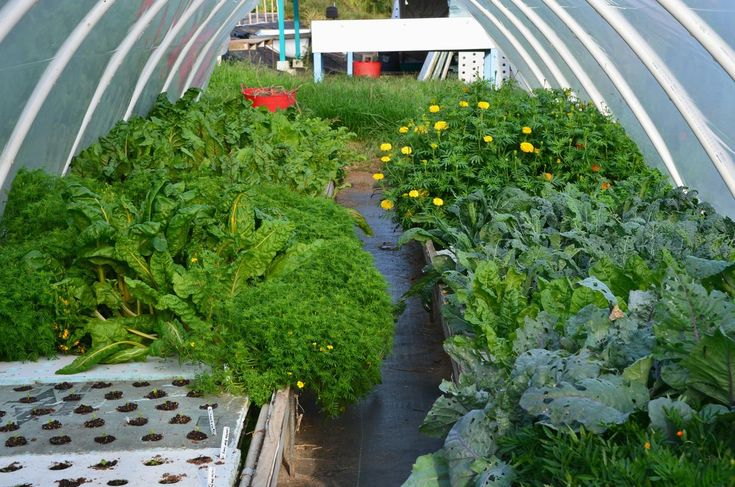 Unless your information on aquaponics comes from a profitable commercial aquaponics farm, it is less than optimium if you're concerned about productivity, economy of construction, and ease of operation of your system.