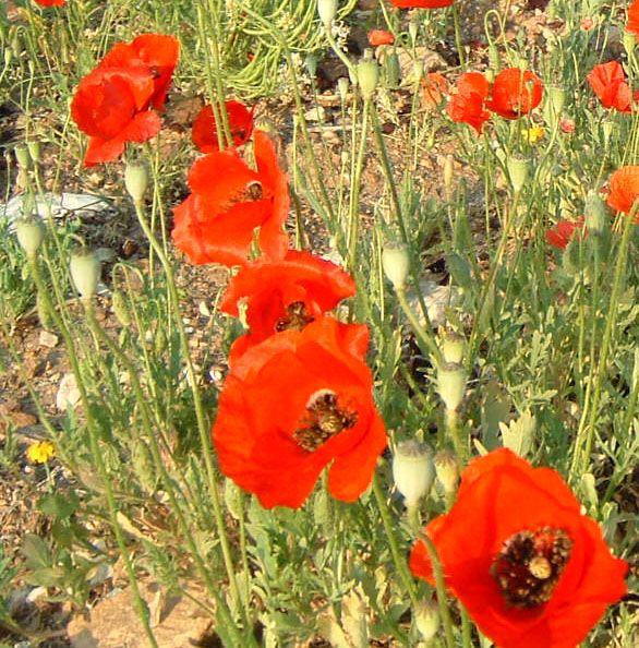 Het gras verdort, de bloem valt af, maar het woord van onze God houdt eeuwig stand. Jesaja 40:8 Ons menselijke leven is net zo vergankelijk als gras dat verdort. Als we echter geloven in Gods Woord kunnen we ontkomen aan de vergankelijkheid.