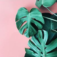A color combination that makes us want to get up and greet the day, caught by Instagram apartmentf15. #philodendron