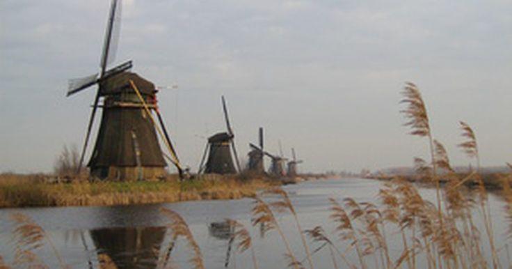 Plantas y animales de Holanda. Holanda es uno de los países más intensamente cultivados y desarrollados de Europa. Conocida por su impresionante sistema de diques y canales, en general no se piensa en Holanda como un país rico en naturaleza, pero hay muchas especies de plantas y animales que se desarrollan en este país.