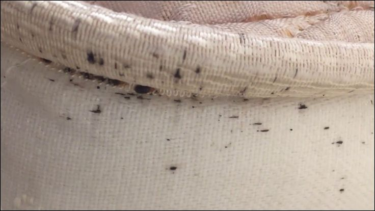 Bed Bugs Signs On Mattress