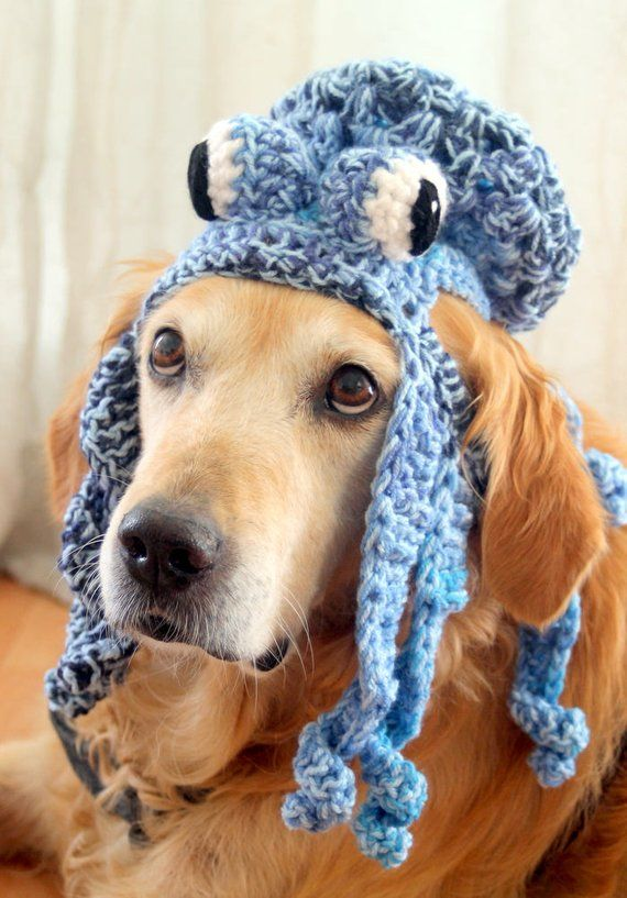 20 Costumes That Are Perfect For Big Dogs Big Dog Halloween