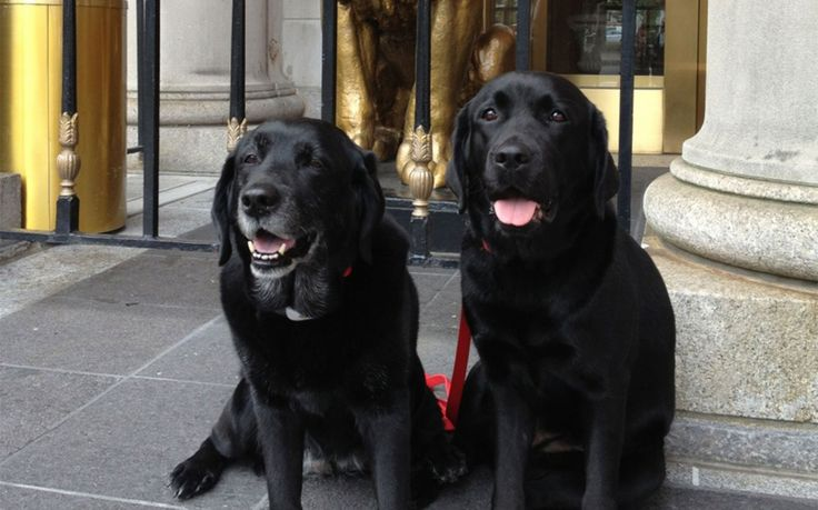 Fairmont Copley Plaza - Around the World in Hopelessly Cute Hotel Pets   Travel + Leisure