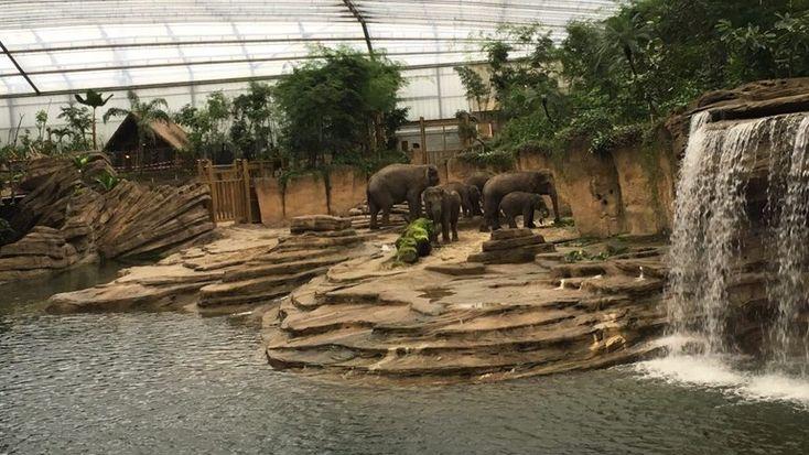 De olifanten in hun nieuwe verblijf (foto: Ineke Kemper / RTV Drenthe)