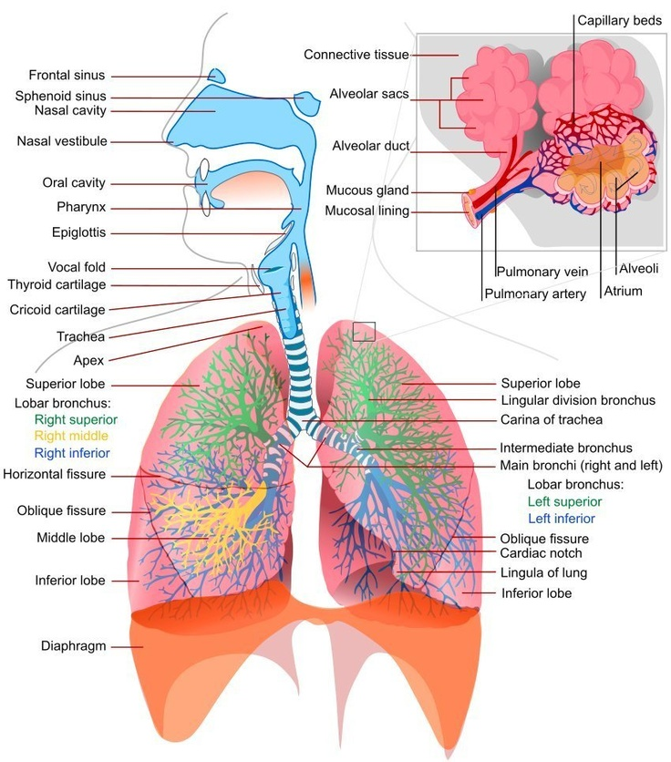 114 best - Respiratory Therapy images on Pinterest Nursing - respiratory therapist job description